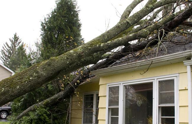 Tree Service Crozet, VA