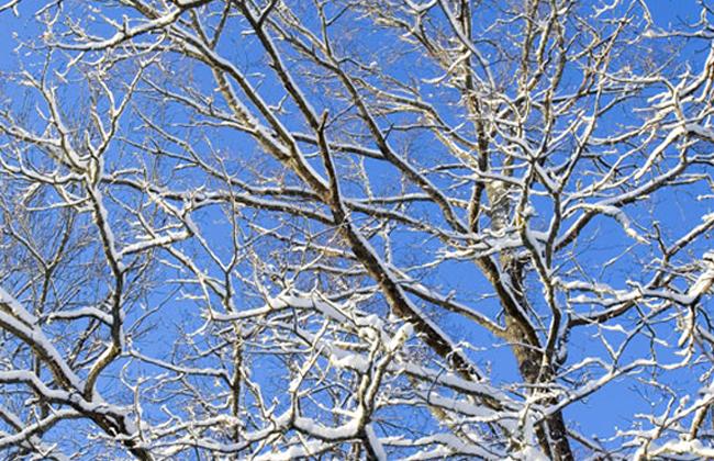 Tree Service Ivy, VA