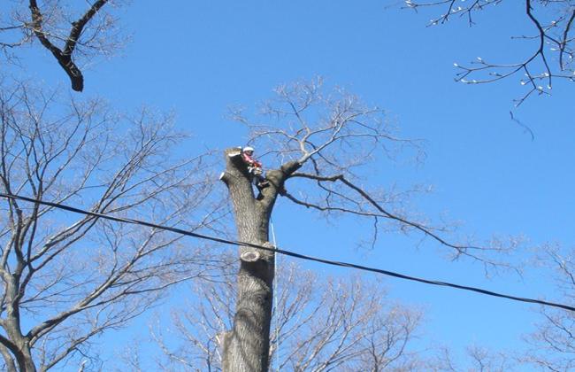 Tree Service Staunton, VA
